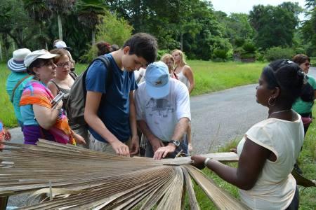 Mathurin présente à Thierry les plantes cubaines