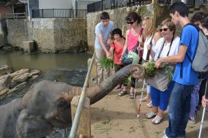 notre groupe nourrissant les éléphants de la réserve de Pinnawala