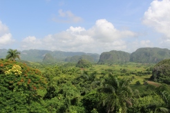 paysage jungle cubaine
