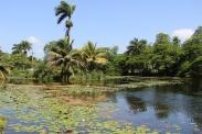 réserve de crocodiles