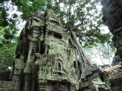 arbre fromager géant sur le temple de Preah Khan