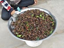 mélange d'insectes à déguster