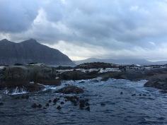 Otaries sur leur rocher avec montagne au second plan