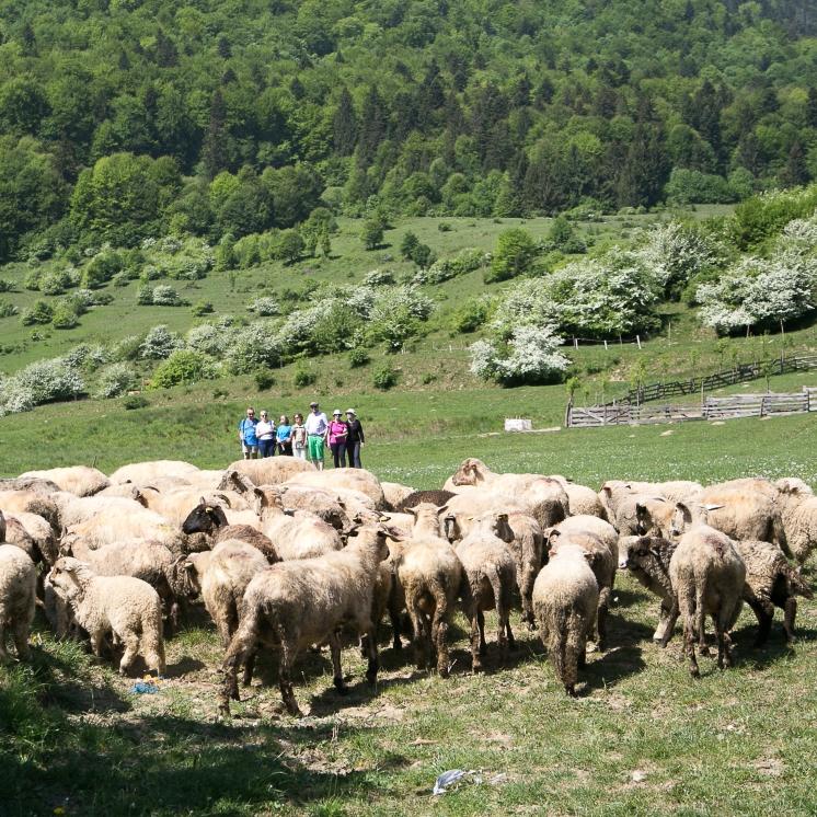 découverte d'une exploitation agricole familiale, au cœur de la magnifique campagne des Carpates.