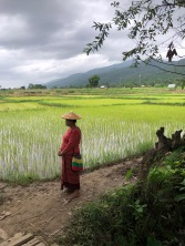 Photo ressemblant à un tableau _ arrière plan des montagnes, rizière au second et au premier plan une birmane